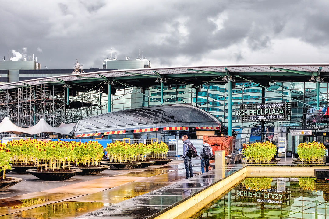 Schiphol Airport sunflowers Amsterdam Netherlands