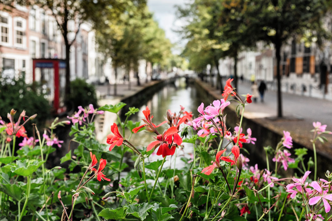 Flowers canal Delft Netherlands