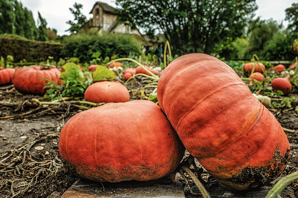 Paris Versailles Hamlet pumpkins Paris France