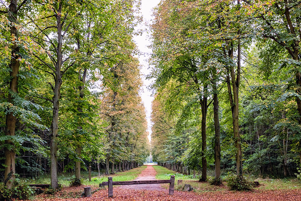 Paris Versailles tree grove wooden fence Paris France